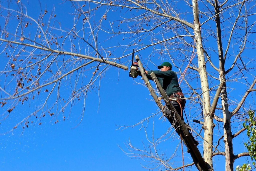 Contact Us-Riverside Tree Trimming and Stump Grinding Services-We Offer Tree Trimming Services, Tree Removal, Tree Pruning, Tree Cutting, Residential and Commercial Tree Trimming Services, Storm Damage, Emergency Tree Removal, Land Clearing, Tree Companies, Tree Care Service, Stump Grinding, and we're the Best Tree Trimming Company Near You Guaranteed!