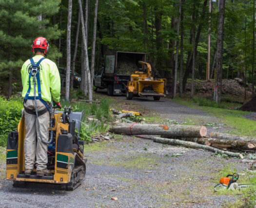 Emergency Tree Removal-Riverside Tree Trimming and Stump Grinding Services-We Offer Tree Trimming Services, Tree Removal, Tree Pruning, Tree Cutting, Residential and Commercial Tree Trimming Services, Storm Damage, Emergency Tree Removal, Land Clearing, Tree Companies, Tree Care Service, Stump Grinding, and we're the Best Tree Trimming Company Near You Guaranteed!