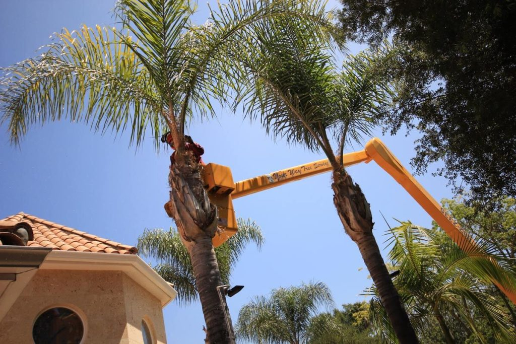 Palm Tree Trimming-Riverside Tree Trimming and Stump Grinding Services-We Offer Tree Trimming Services, Tree Removal, Tree Pruning, Tree Cutting, Residential and Commercial Tree Trimming Services, Storm Damage, Emergency Tree Removal, Land Clearing, Tree Companies, Tree Care Service, Stump Grinding, and we're the Best Tree Trimming Company Near You Guaranteed!