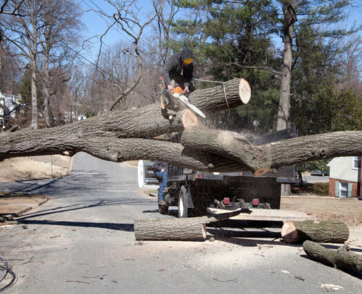 Residential Tree Services-Riverside Tree Trimming and Stump Grinding Services-We Offer Tree Trimming Services, Tree Removal, Tree Pruning, Tree Cutting, Residential and Commercial Tree Trimming Services, Storm Damage, Emergency Tree Removal, Land Clearing, Tree Companies, Tree Care Service, Stump Grinding, and we're the Best Tree Trimming Company Near You Guaranteed!
