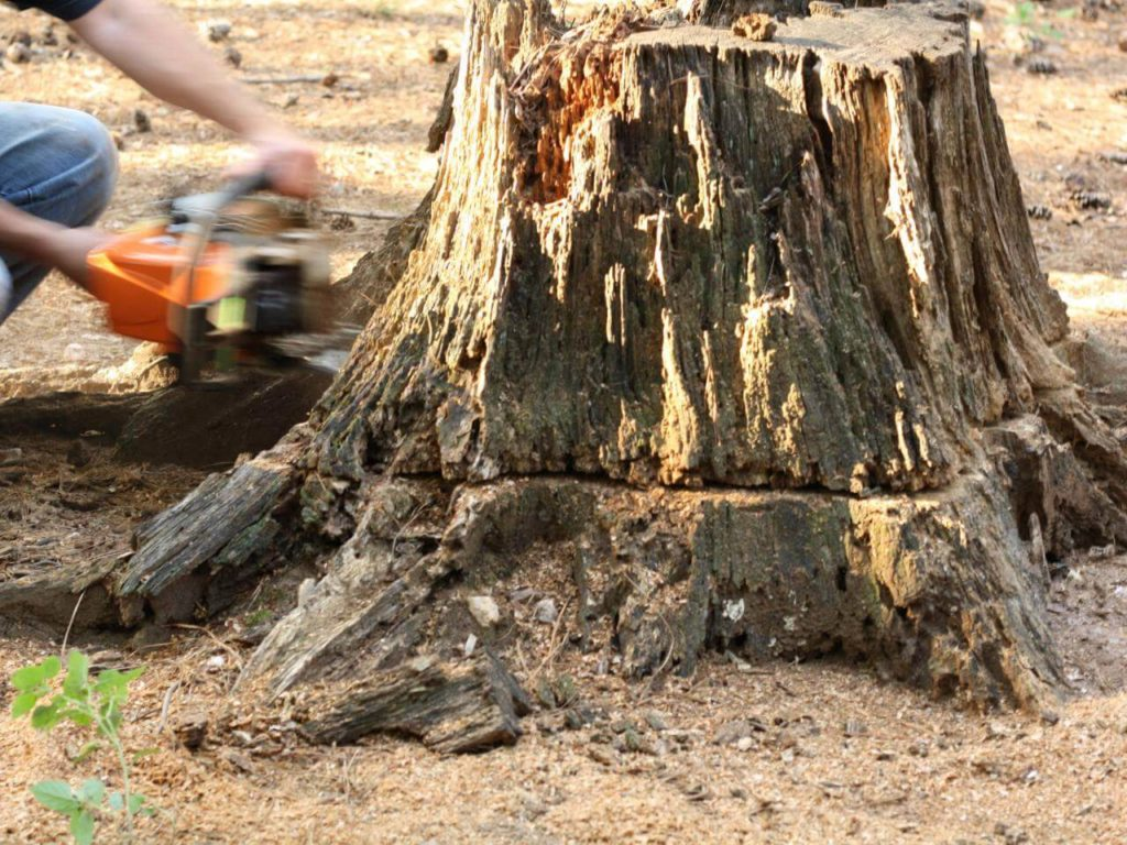 Stump Removal-Riverside Tree Trimming and Stump Grinding Services-We Offer Tree Trimming Services, Tree Removal, Tree Pruning, Tree Cutting, Residential and Commercial Tree Trimming Services, Storm Damage, Emergency Tree Removal, Land Clearing, Tree Companies, Tree Care Service, Stump Grinding, and we're the Best Tree Trimming Company Near You Guaranteed!
