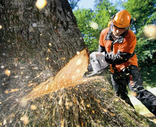 Tree Cutting-Riverside Tree Trimming and Stump Grinding Services-We Offer Tree Trimming Services, Tree Removal, Tree Pruning, Tree Cutting, Residential and Commercial Tree Trimming Services, Storm Damage, Emergency Tree Removal, Land Clearing, Tree Companies, Tree Care Service, Stump Grinding, and we're the Best Tree Trimming Company Near You Guaranteed!