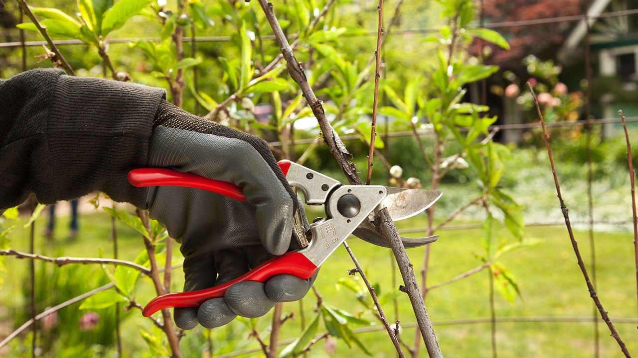 Tree Pruning-Riverside Tree Trimming and Stump Grinding Services-We Offer Tree Trimming Services, Tree Removal, Tree Pruning, Tree Cutting, Residential and Commercial Tree Trimming Services, Storm Damage, Emergency Tree Removal, Land Clearing, Tree Companies, Tree Care Service, Stump Grinding, and we're the Best Tree Trimming Company Near You Guaranteed!