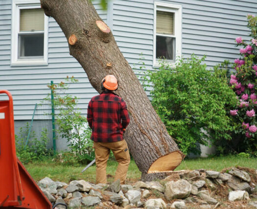 Tree Removal-Riverside Tree Trimming and Stump Grinding Services-We Offer Tree Trimming Services, Tree Removal, Tree Pruning, Tree Cutting, Residential and Commercial Tree Trimming Services, Storm Damage, Emergency Tree Removal, Land Clearing, Tree Companies, Tree Care Service, Stump Grinding, and we're the Best Tree Trimming Company Near You Guaranteed!