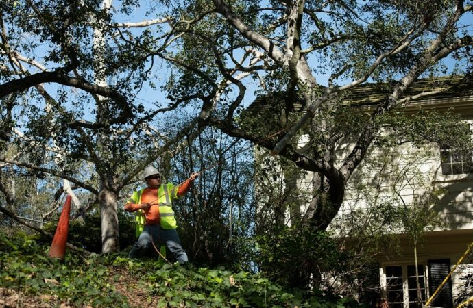 Edgemont-Riverside Tree Trimming and Stump Grinding Services-We Offer Tree Trimming Services, Tree Removal, Tree Pruning, Tree Cutting, Residential and Commercial Tree Trimming Services, Storm Damage, Emergency Tree Removal, Land Clearing, Tree Companies, Tree Care Service, Stump Grinding, and we're the Best Tree Trimming Company Near You Guaranteed!