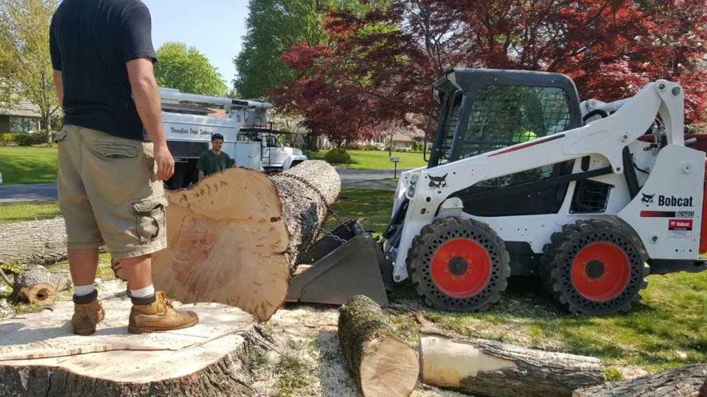 Jurupa Valley-Riverside Tree Trimming and Stump Grinding Services-We Offer Tree Trimming Services, Tree Removal, Tree Pruning, Tree Cutting, Residential and Commercial Tree Trimming Services, Storm Damage, Emergency Tree Removal, Land Clearing, Tree Companies, Tree Care Service, Stump Grinding, and we're the Best Tree Trimming Company Near You Guaranteed!